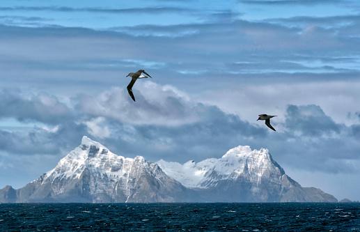 Albatross「Snow covered mountains, South Georgia Island」:スマホ壁紙(4)