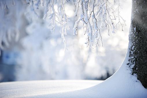 落葉樹「雪に覆われた枝の白樺の」:スマホ壁紙(5)