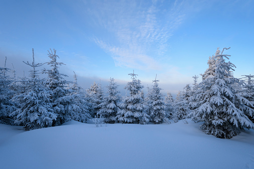 Snowdrift「Snow covered trees in winter, Mount Fichtelberg, Oberwiesenthal, Erzgebirge, Ore Mountains, Saxony, Germany, Europe」:スマホ壁紙(10)