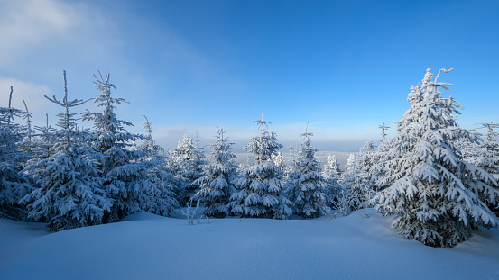 Snowdrift「Snow covered trees in winter, Mount Fichtelberg, Oberwiesenthal, Erzgebirge, Ore Mountains, Saxony, Germany, Europe」:スマホ壁紙(5)