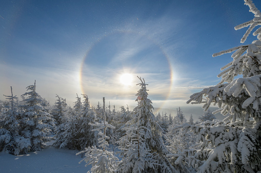 Snowdrift「Snow covered coniferous trees with halo and sun in winter,」:スマホ壁紙(9)