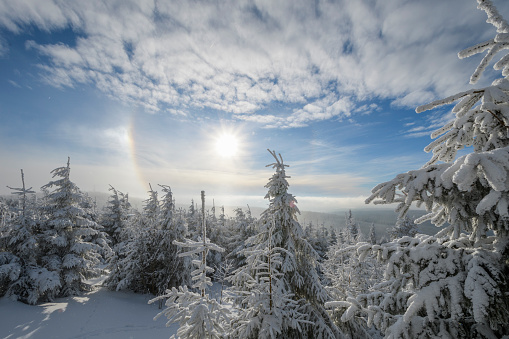 Snowdrift「Snow covered coniferous trees with halo and sun in winter,」:スマホ壁紙(8)