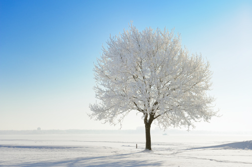 Frost「Snow covered tree in winter landscape against blue sky」:スマホ壁紙(9)