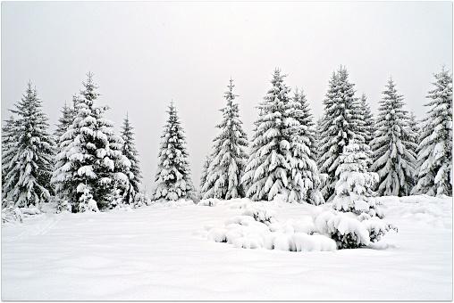 マツ科「Snow covered fir trees, Transylvania, Romania」:スマホ壁紙(4)