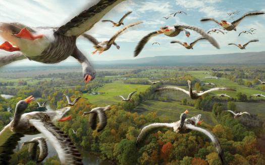 Flock Of Birds「Flying Geese」:スマホ壁紙(16)