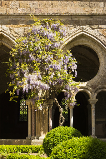 Abbey - Monastery「Fontfroide Abbey, cloister with wisteria」:スマホ壁紙(16)