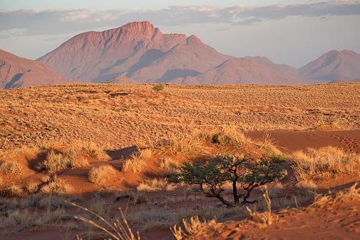 Namib-Naukluft National Park「Namib Rand Naturreservat, Namibia」:スマホ壁紙(13)