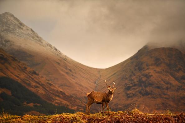 Horizontal「Deer Grazing At Glen Etive」:写真・画像(17)[壁紙.com]