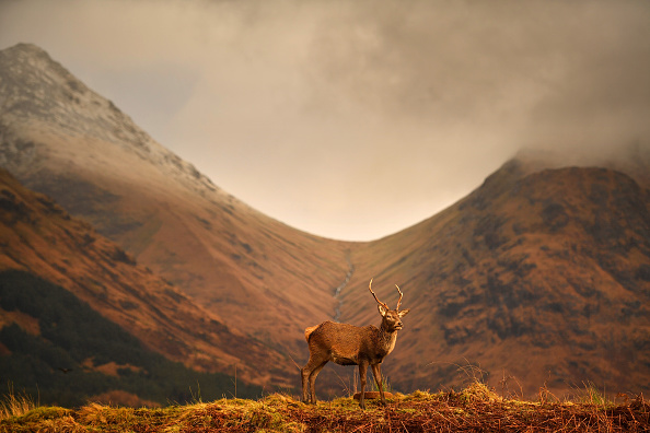 自然「Deer Grazing At Glen Etive」:写真・画像(9)[壁紙.com]