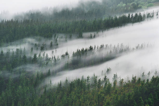 Spain, Basque Country, mist in the forest of Oiz:スマホ壁紙(壁紙.com)