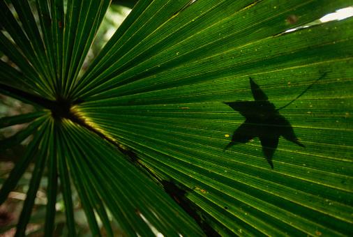 Ocala National Forest「Palmetto Frond and Oak Leaf」:スマホ壁紙(8)