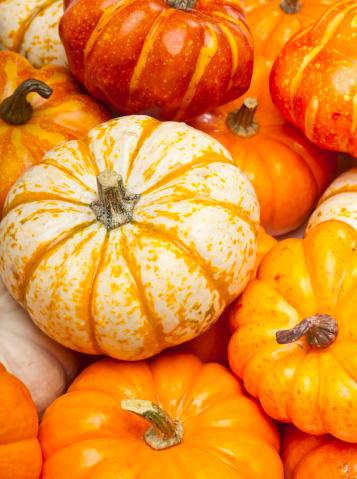 Gourd「Various Pumkins Close Up」:スマホ壁紙(8)