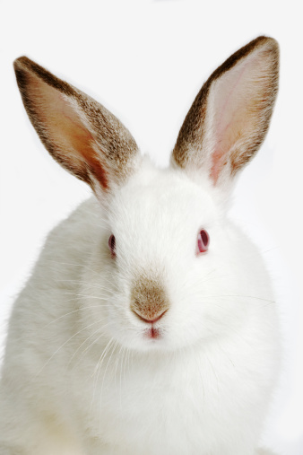 Rabbit「Rabbit against white background, close-up」:スマホ壁紙(12)