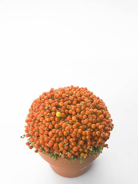 Pot of rowanberries, elevated view:スマホ壁紙(壁紙.com)
