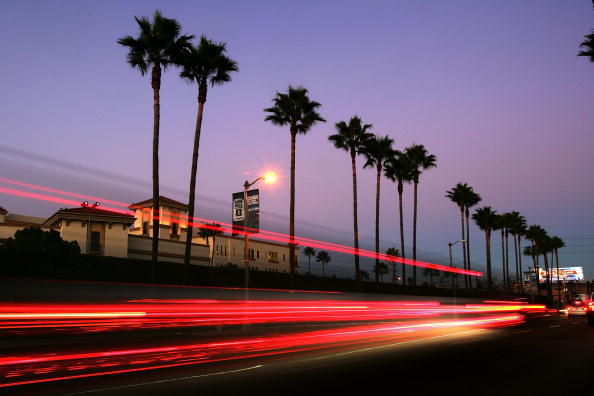 Hollywood - California「LAs Signature Palm Trees Are Disappearing」:写真・画像(0)[壁紙.com]