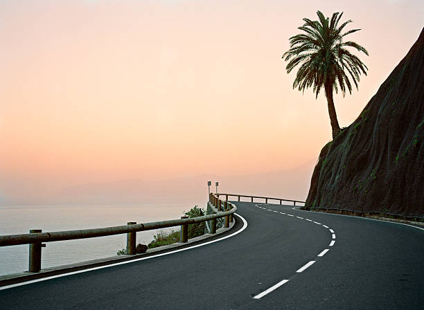 Canary Islands, La Gomera, silhouette of palm tree on coastal highway at sunset:スマホ壁紙(壁紙.com)