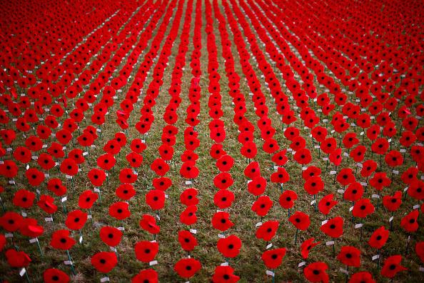 Poppy - Plant「Auckland Prepares For Comemoration Of ANZAC Centenary」:写真・画像(1)[壁紙.com]