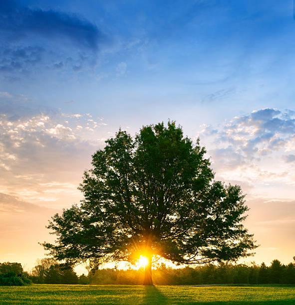 Bright sunrise behind lone tree:スマホ壁紙(壁紙.com)