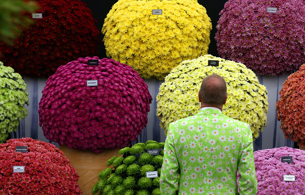 Chrysanthemum「Preview Day At The 2015 Chelsea Flower Show」:写真・画像(19)[壁紙.com]