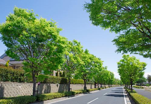 Day「Tree-lined street in suburb」:スマホ壁紙(6)