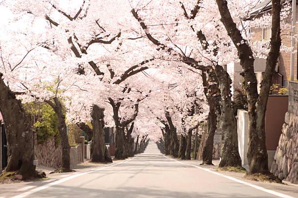 Treelined street, Hyogo Prefecture, Honshu, Japan:スマホ壁紙(壁紙.com)