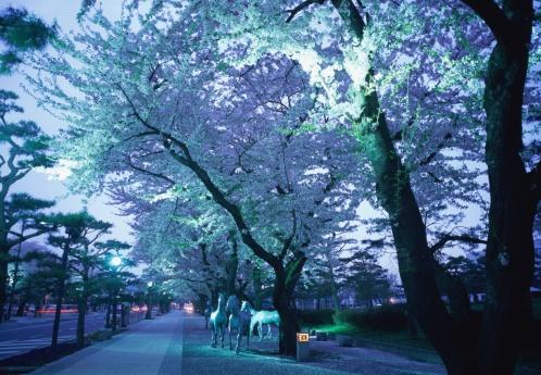 夜桜「Treelined street with cherry blossoms」:スマホ壁紙(6)