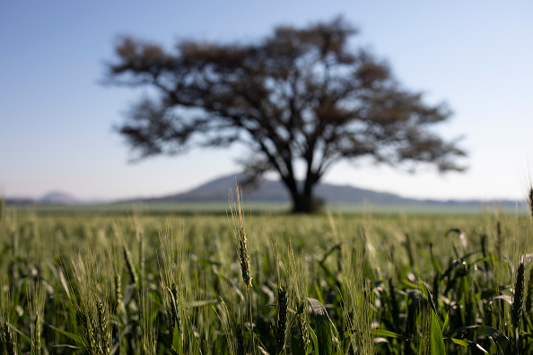 Wheat「Farming In Zimbabwe」:写真・画像(15)[壁紙.com]