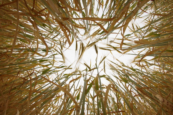 成長「A Drought Is Officially Declared In Parts Of East Anglia」:写真・画像(19)[壁紙.com]