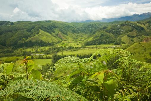 Rolling Landscape「Salento, Colombia」:スマホ壁紙(19)
