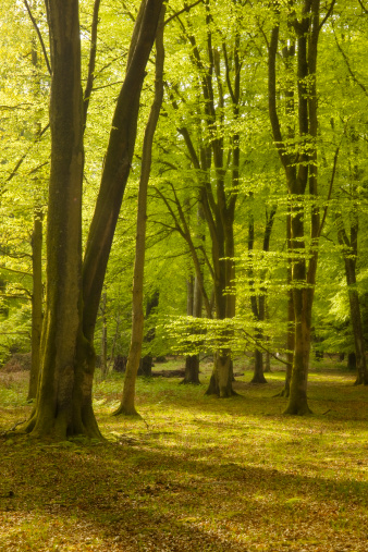 Grove「Spring trees in New Forest, Hampshire, England, UK」:スマホ壁紙(7)