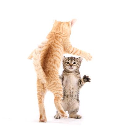 子猫「ダンスの猫」:スマホ壁紙(7)