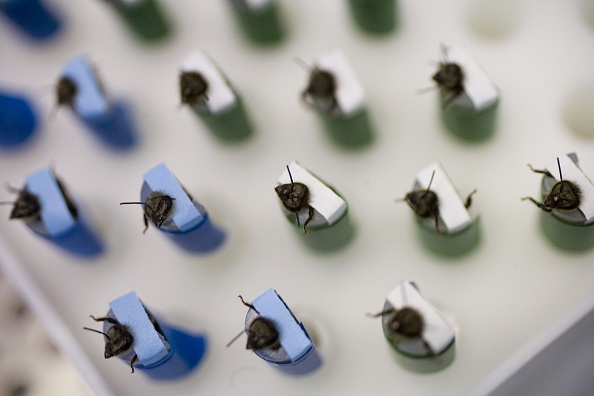 Los Alamos National Laboratory「Los Alamos Laboratory Trains Bees To Detect Explosives」:写真・画像(3)[壁紙.com]