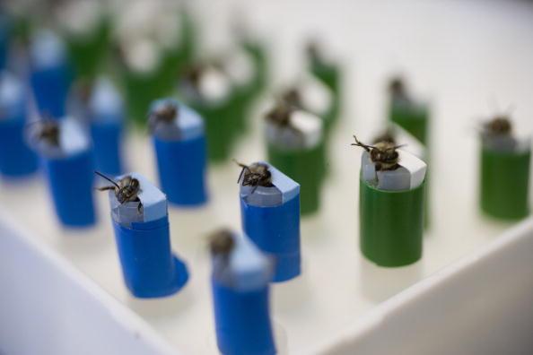 Rick Scibelli「Los Alamos Laboratory Trains Bees To Detect Explosives」:写真・画像(15)[壁紙.com]