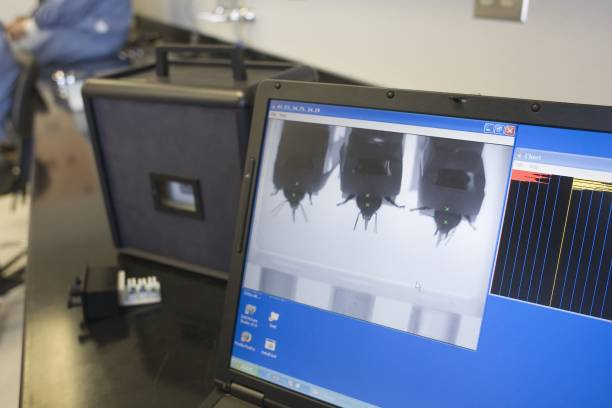 Los Alamos Laboratory Trains Bees To Detect Explosives:ニュース(壁紙.com)