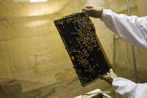 Rick Scibelli「Los Alamos Laboratory Trains Bees To Detect Explosives」:写真・画像(2)[壁紙.com]