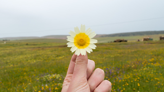 One Person「Holding a Flower in the Field」:スマホ壁紙(15)