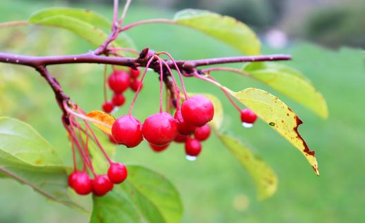 Rowanberry「Fruits from nature」:スマホ壁紙(5)