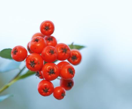 Rowanberry「Fruits from nature」:スマホ壁紙(10)