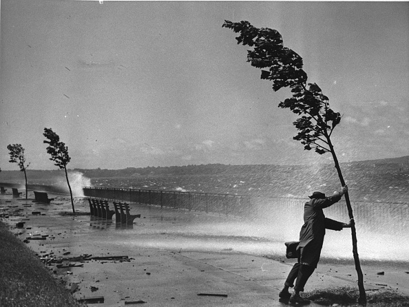 One Man Only「Man Clings To Tree During Hurricane Carol」:写真・画像(14)[壁紙.com]