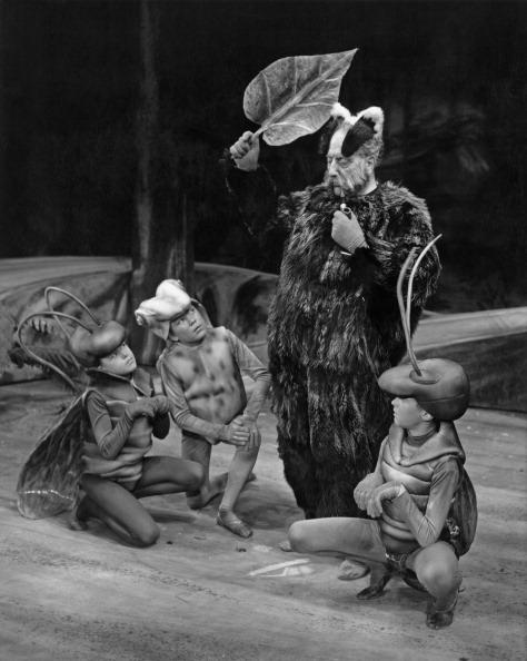 虫・昆虫「The Cunning Little Vixen, Sadler's Wells Theatre」:写真・画像(19)[壁紙.com]