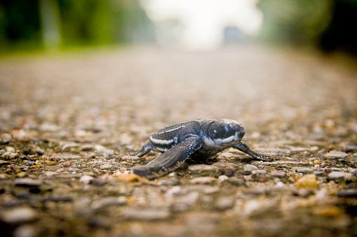 Run Over「Baby Turtle on Road」:スマホ壁紙(18)