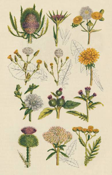 Varieties Of British Wildflowe:ニュース(壁紙.com)