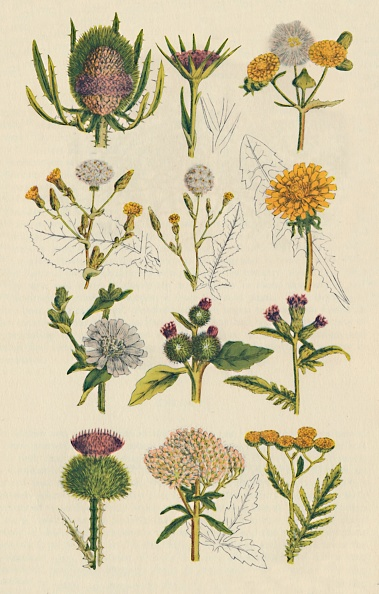 Illustration「Varieties Of British Wildflowe」:写真・画像(7)[壁紙.com]