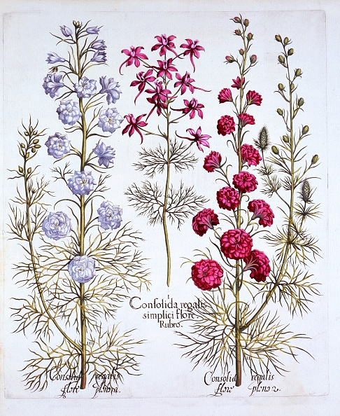 Basil「Varieties Of Larkspur」:写真・画像(9)[壁紙.com]