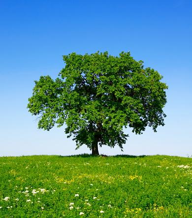 落葉樹「グリーンツリーの春」:スマホ壁紙(18)