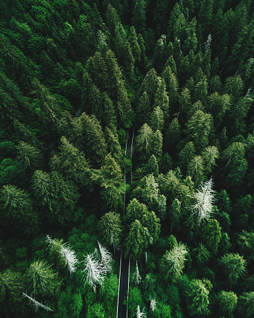 Drone Point of View「green tree aerial view in washington state」:スマホ壁紙(13)