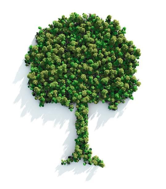 Green Tree:スマホ壁紙(壁紙.com)