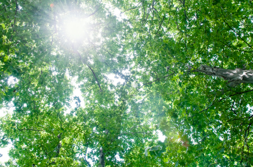 Surrounding「Green tree with sun flare」:スマホ壁紙(0)