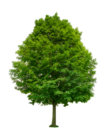 落葉樹「Green tree」:スマホ壁紙(14)