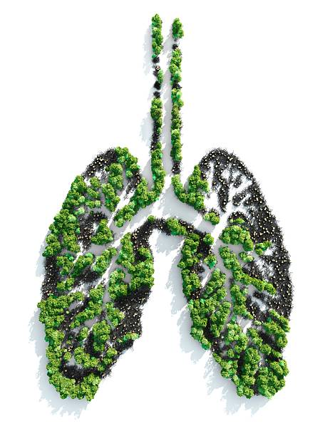 Ariel view of foliage planted in the shape of lungs :スマホ壁紙(壁紙.com)